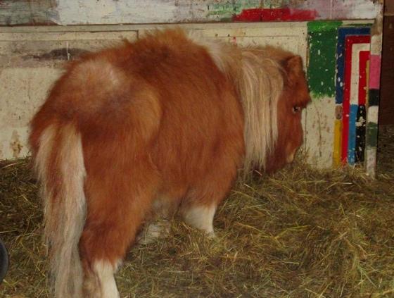 verwaarloosde pony
