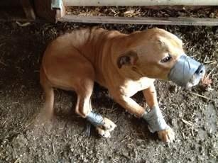 Hond met tape vastgebonden - dierenbeul