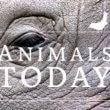 PiepVandaag heet voortaan Animals Today