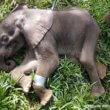 #GNvdD: Vrachtwagenchauffeurs redden baby-olifant