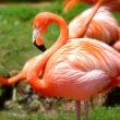 Flamingo doodgetrapt door kinderen in dierentuin