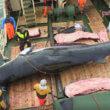 #GNvdD: Europees Parlement tegen Noors walvisvlees