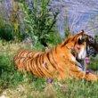 #GNvdD: Bedreigde diersoorten doen het goed in Myanmar