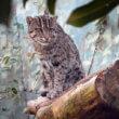 Vissende kat