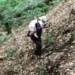 #GNvdD: Blinde hond wordt na week vermist teruggevonden