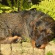 Dierenarts waarschuwt: zon gevaarlijk voor huisdieren