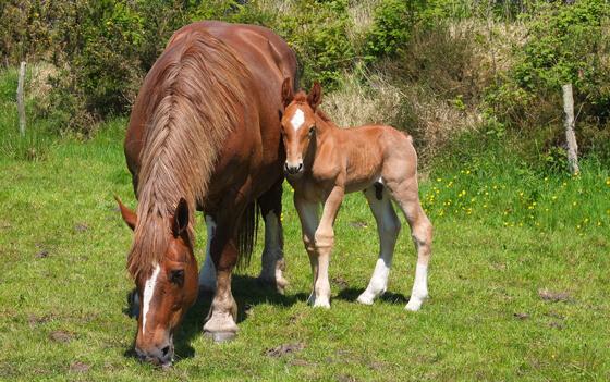 besmettelijke paardenziekte
