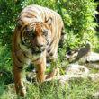 30% van werelderfgoedgebieden ernstig bedreigd