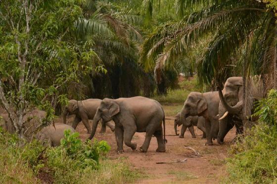 mens-olifant conflicten