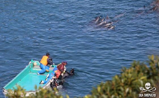 dolfijnenjacht Taiji