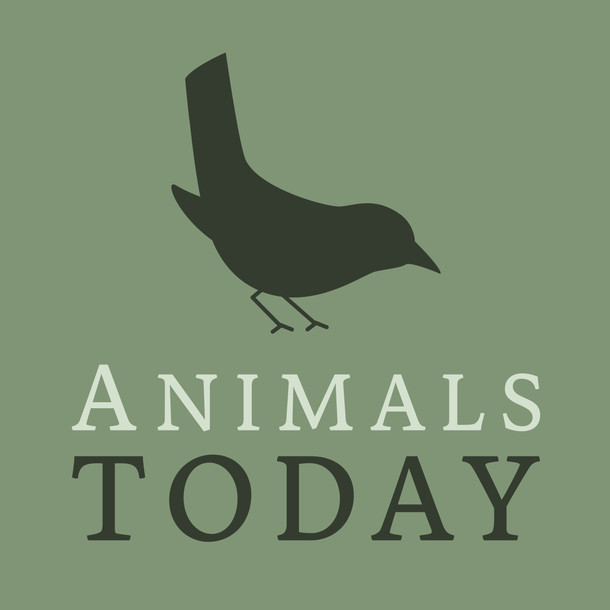 (c) Animalstoday.nl
