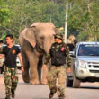 #GNvdD: Olifant Kaew weer veilig thuis na lange wandeling