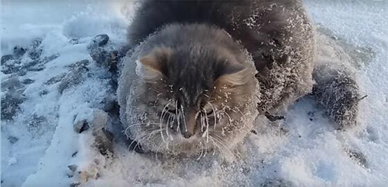 vastgevroren kat