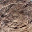 Fossiel Dickinsonia geeft inzicht in evolutie dieren