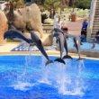 Verbod op opvoeden dolfijnen in gevangenschap Frankrijk