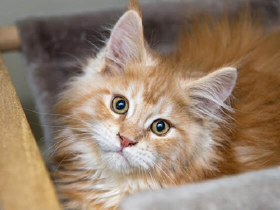 kattenknuffelaar