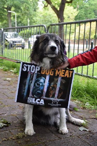 Yulin honden- en kattenvleesfestival