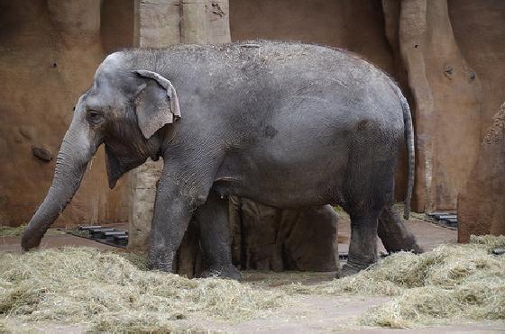 dierentuinen in een notendop
