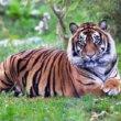 Amerikaanse high school leukt prom night op met tijger