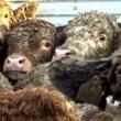 1 miljoen stemmen tegen verre veetransporten