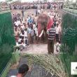 #GNvdD: Indische olifant vrij na 50 jaar gevangenschap