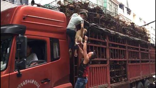 hondenvleesfestival Yulin