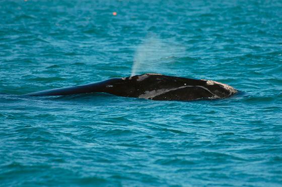 dode walvissen