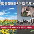 18.000 bloemenzaden voor gemeente Meierijstad tegen megastal