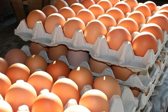 miljoenen kippen