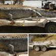Grootste krokodil van Australië doodgeschoten
