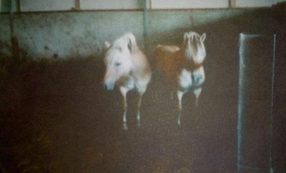 fjordenpaarden