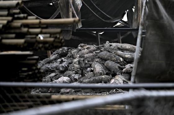 slachtoffers van stalbranden