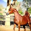 Paard lijkt sprekend op stripfiguur