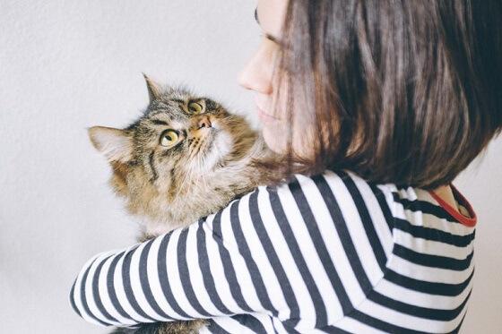 kattenknuffelaars