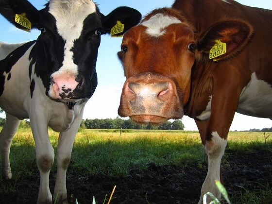 preventieve diergezondheid