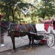 #GNvdD: Verbod op paardenkoetsen in Barcelona