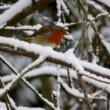 Overwintertips voor dieren: binnen- en buitenvogels