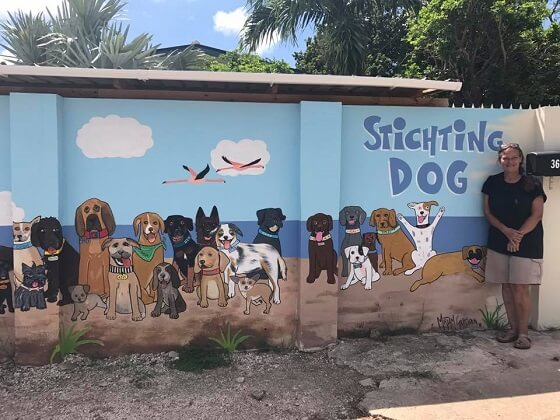 Lost in Paradise: The Dogs of Curaçao