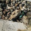 Honden vastgebonden op Spaanse treinrails