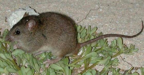Australische diersoorten