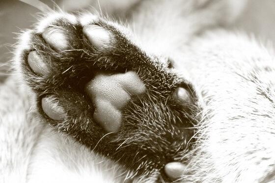 huisdierenpootjes