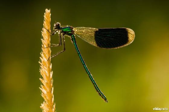 insectensoorten