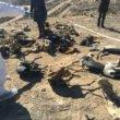 Dode galgo's gevonden in Spaans massagraf