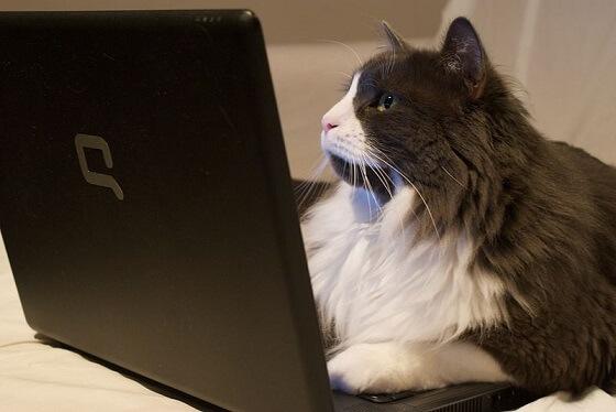 internetbedrijven