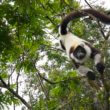 Helft planten- en diersoorten in gevaar door klimaatverandering