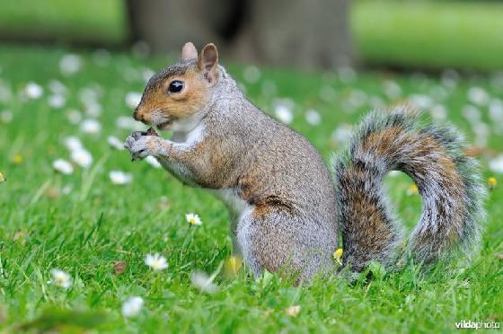 probleemoplossende eekhoorns