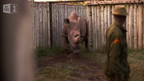 neushoorn Sudan