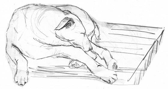 Wereldhond