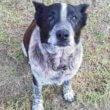 #GNvdD: Loyale familiehond Max waakt 16 uren lang over verdwaald meisje