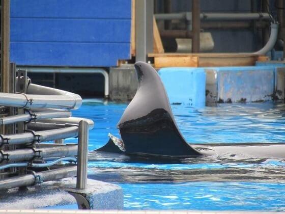 orka Katina